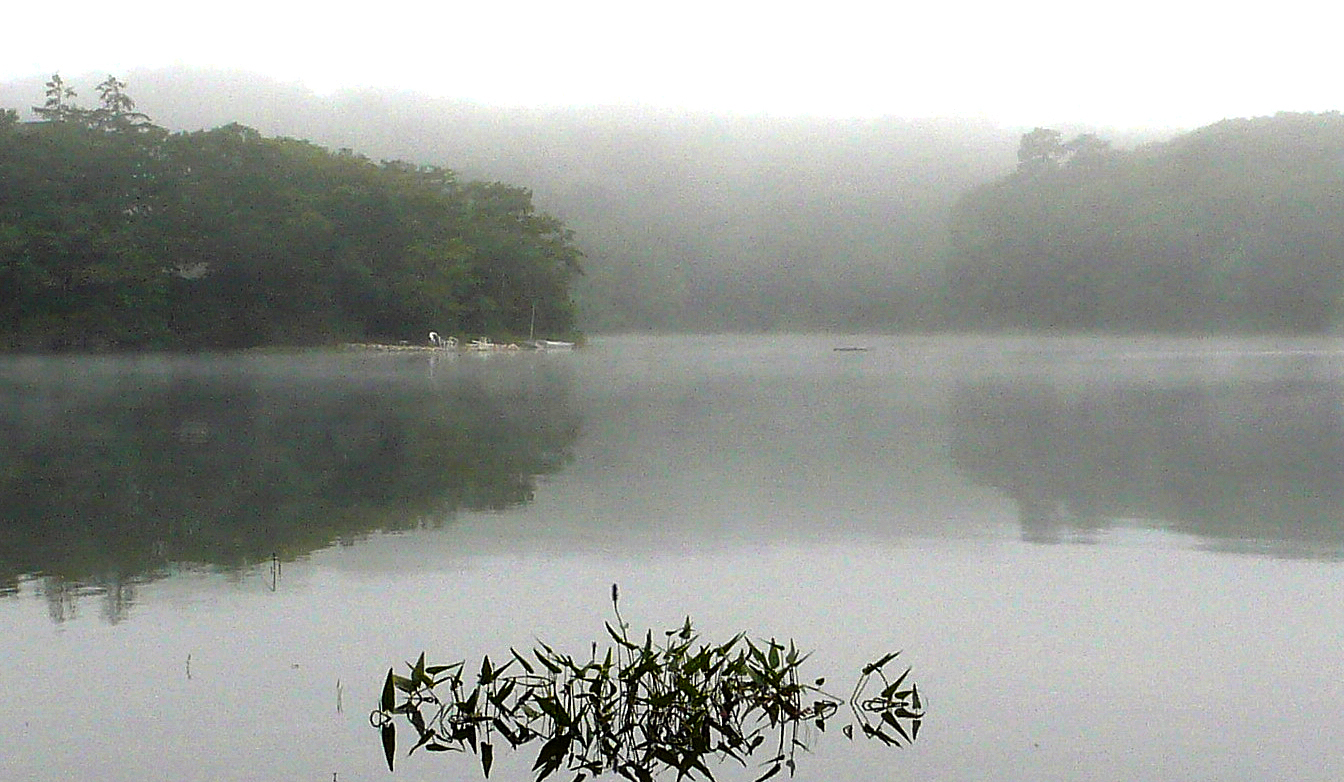 Image of fog on Baker's Pond