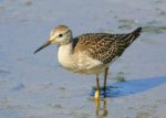 Birds of the Shore – Nauset Beach