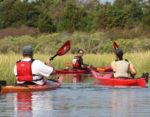 Nauset Marsh Kayak Tour