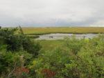 Pochet Island Hike *