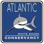 Sharktivities!
