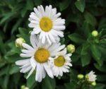 Open house: Beautiful, Stormwater-managed Garden