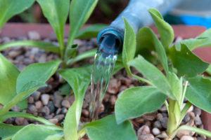 RHS rainwater irrigation